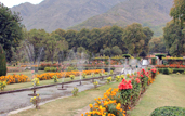 Srinagar Local