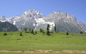 Pahalgam Excursion - 95Km