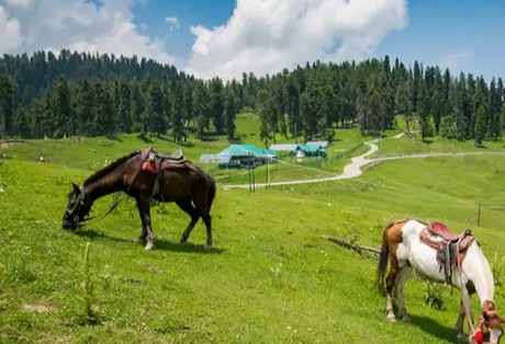 Kashmir Travel Packages